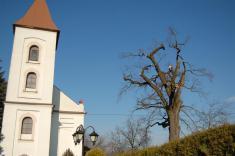 Dub u kaple